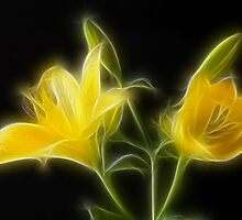 Lillies by Geoff Marshall