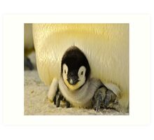 Cute Animals - Penguin Art Print