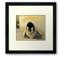 Cute Animals - Penguin Framed Print