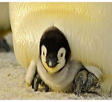 Cute Animals - Penguin Photographic Print