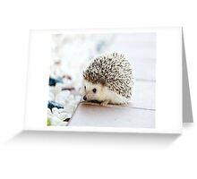 Cute Animals - Hedgehog Greeting Card