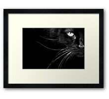 The Cat's Whiskers Framed Print