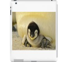 Cute Animals - Penguin iPad Case/Skin