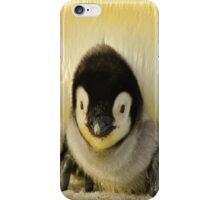 Cute Animals - Penguin iPhone Case/Skin