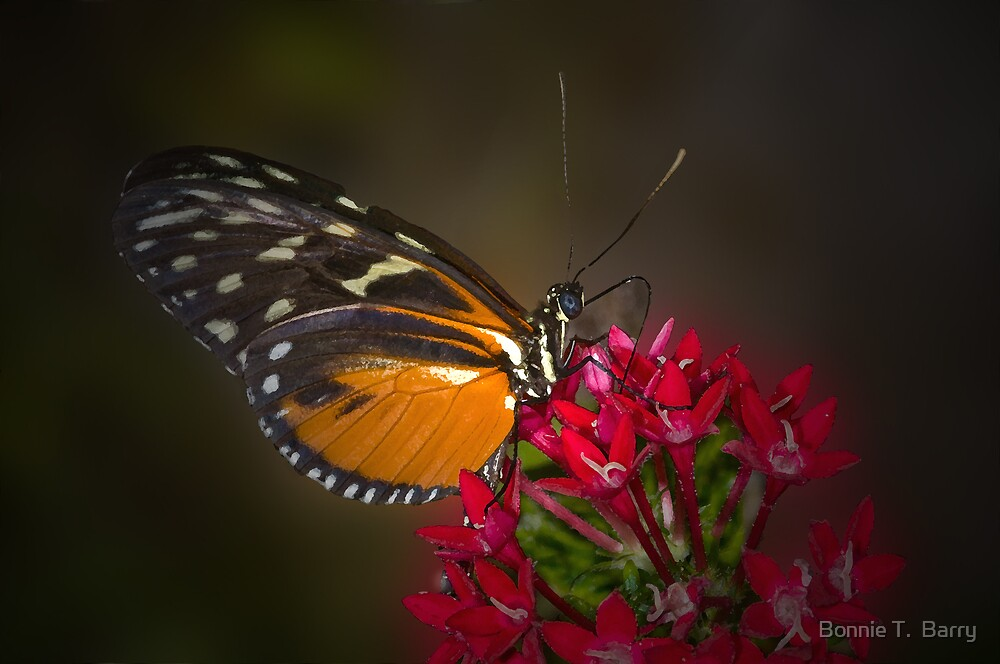 Quiet Butterfly Moment by Bonnie T.  Barry