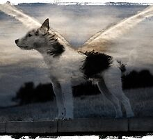 Angelic Dog by aitchart