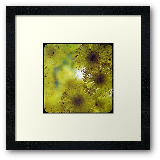 Golden Wattle  by Kitsmumma