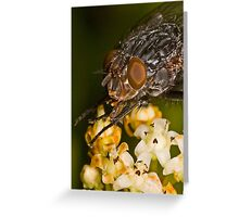 Fly eating nectar Greeting Card