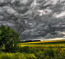 Before the storm by Sigrid  Kleinecke