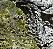 Green and Grey Wall by eyeshoot