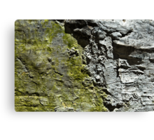 Green and Grey Wall Canvas Print