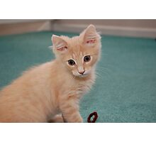 Hobbes the Cat Photographic Print