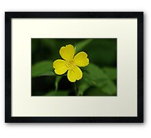 Carolina Primrose-Willow Framed Print