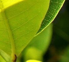 The neon of green leaves in morning light by Nadia Korths