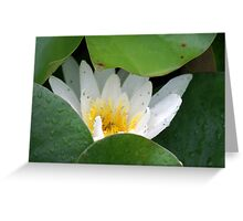 lily where are you ? Greeting Card