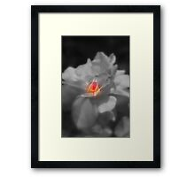 Heart of a Rose... Framed Print