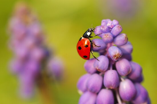 Spring time by Mirka Rueda Rodriguez