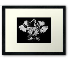 Tulip 3: Good Morning Framed Print