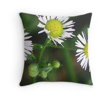 heath aster small white macro flowers art Throw Pillow