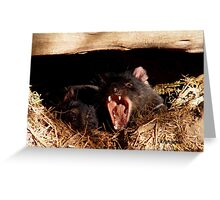 photoj Tasmania, Tassie Devil Greeting Card