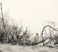 Amidst The Thicket by shuttersuze75
