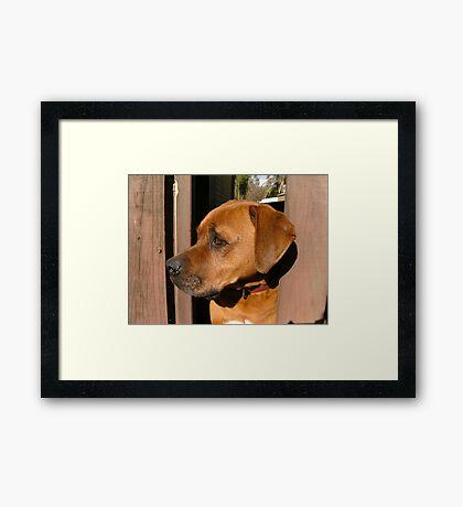 Scooby. Framed Print