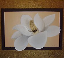 Cream Magnolia by Beth White