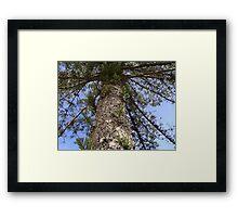 Huge Tree! Framed Print
