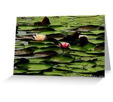 #425   Lotus Flowers & Pads Greeting Card