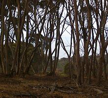 Kangaroo Island by soojie