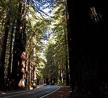Driving Among The Giants by BodieBailey