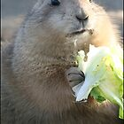 Black-tailed Prairie Dog at dinner by Thaily