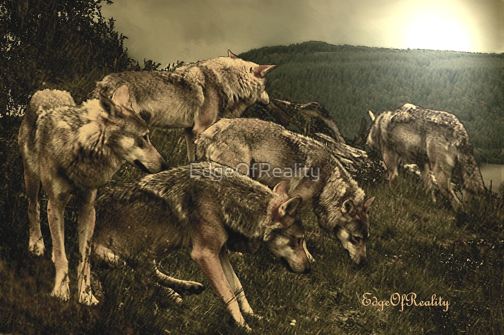 Wolf Pack by EdgeOfReality