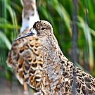 Two Ruff by Margot Komine