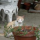 Cat by Flower Pot by Emma Coughlan