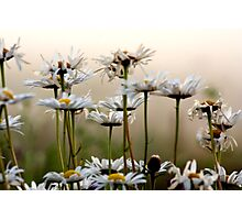 Daisies In The Fog Photographic Print
