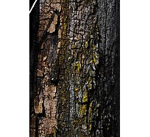 Mossy wood bark Photographic Print