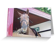Horse in a horse box Greeting Card