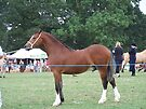 Proud Stallion .. I am going to win this by LoneAngel
