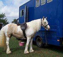 Paint gypsy vanner by LoneAngel