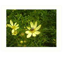Flower Fly Art Print