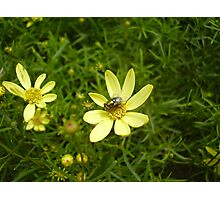 Flower Fly Photographic Print