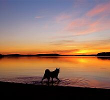 Sunset by Katariina Lonnakko