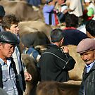 Karakol animal market 2 by sion