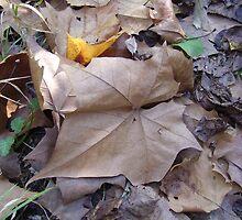 Tinge of Yellow by Felicia Drury