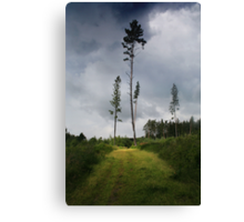 Pines (My forest) Canvas Print