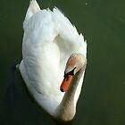 swan by KatieBird