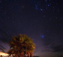 Stars At Big Cypress  by Michael L Dye