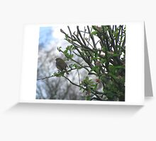 robin in apple tree Greeting Card