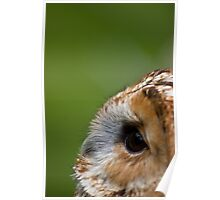 Profile of an Owl  Poster